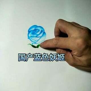 #果酱画##情人节##蓝色妖姬#