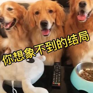 主人不在家时,狗狗会做些什么?总之,四宝是准备玩high了😅😅有时候,我就是个多余的😂😂😂#宠物##搞笑狗狗##金毛#@美拍小助手 @宠物频道官方账号