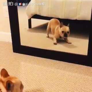 #呆萌狗狗##快乐的小二逼##宠物照镜子# 丑萌丑萌的狗狗🐶 狗生幸福🌸 萌死啦 据说可爱的人都点赞啦👯