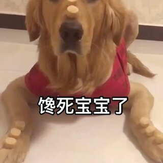 这家伙就录个视频,这口水也是没谁了😂#宠物##汪星人#
