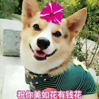 🎈新的一年🎉🎊祝点赞的朋友们健康快乐!越来越美,有钱花,随便花💐💕😘#宠物##肉圆小短腿##我要上热门@美拍小助手#