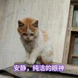 #宠物##我要上热门@美拍小助手#安静的猫咪,一个月领养回来。长大了,挺好。