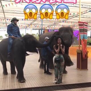 😂😂我被两头大象袭击,吓死宝宝啦,小小秦又一个劲的哭,但是但是那小象真的超级超级可爱#我的生活日常##泰国之旅##可爱小象#