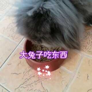 #in my pockets##吃秀#哈哈,兔子依然那么可爱好动😂
