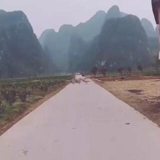 开车遇到鹅群,谁能告诉我怎么过去?跪求最佳答案!#精选##运动##汽车#
