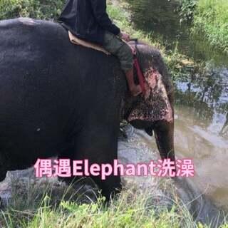 早上起床看见有Elephant在洗澡,赶紧起床去看看,结果还没跑到面前就洗完了朝我走来!路边摘了根香蕉喂小象🐘,萌萌哒#尼泊尔##奇特旺骑大象##奇特旺皇家国家森林公园#
