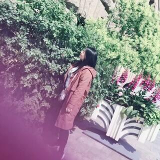 #魔都上海##在路上#