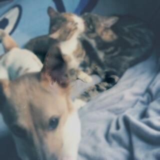 日常猫虐🐶#宠物##单身狗的日常#