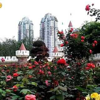 """广州福莱花园-我的新家园。衷心祝福美拍朋友们""""五一节""""快乐!幸幸福福、美美满满、平平安安、开开心心、快快乐乐过好每一天!🌹🌹🌹#音乐##广州##手机摄影#"""