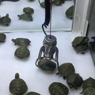 抓乌龟,还有谁。。。@抓娃娃上瘾的硬龙🌹 #抓乌龟##我要上热门@美拍小助手#