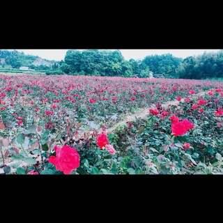美丽的大贵州 我的家乡我又想你了#家乡#