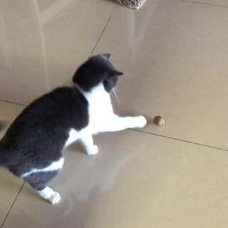 喵妹迪迪完美诠释 一样的玩具不一样的玩法??#宠物##游戏##俩喵欢乐多#