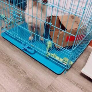 #训练狗狗##宠物#长高了,也长胖了#我要上热门@美拍小助手#@宠物官方频道账号