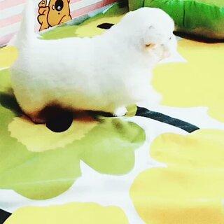 小宝贝,现在走道很快的,找它麻麻呢#宠物#