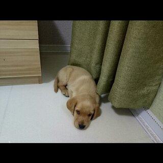 狗狗生病了😩#宠物#