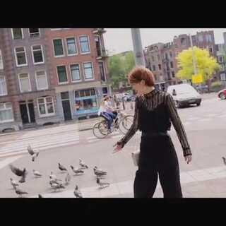 吳宇森導演的電影都騙人, 歐洲的鴿子不怕人完全不想飛😓
