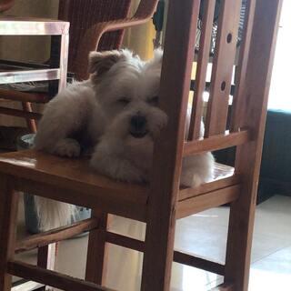真的一点都不困😂只是想靠着凳子啦😂#宠物#