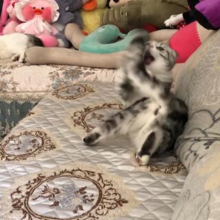是尾巴先惹的我哟🤪#宠物#